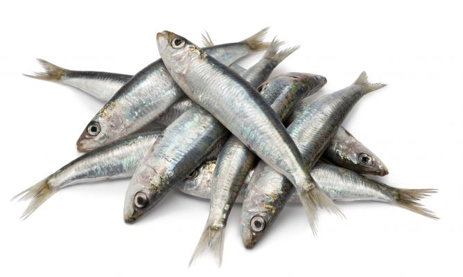 sardinas asadas a la gallega